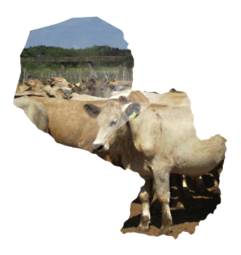 paraguay-farm-investment