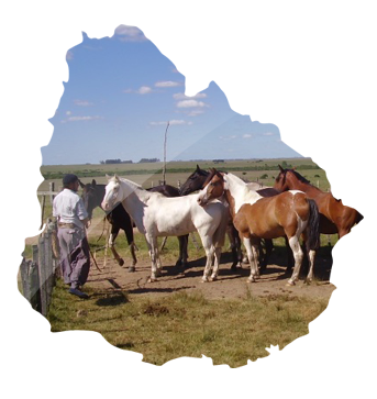 uruguay-farm-investment-opportunity