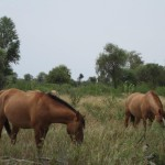 paraguay-ranch-investment