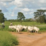beef-investment-southern-connections