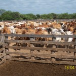 beef-market-southern-connections