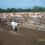 cattle-investment-southern-connections