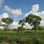 southern-connections-farm-investment