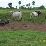 farm-investment-south-america