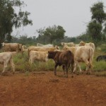 beef-investment-paraguay