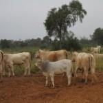 beef-market-paraguay