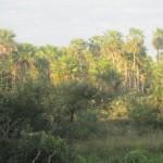 cow-market-paraguay