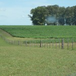 agriculture-investment-uruguay