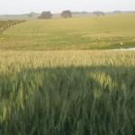 cattle-investment-uruguay