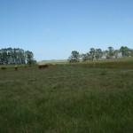 cattle-market-uruguay