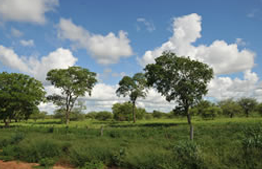 ranch-investment-opportunity-in-paraguay